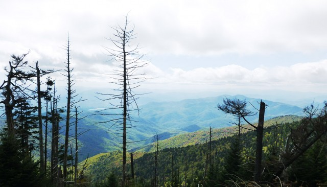 """Foresters and ecologists have long gauged the severity of drought from tree mortality that happens the same year,"" says James S. Clark. ""But the damage suffered during drought sets in motion a decline that can kill trees years later."" Above: Trees killed by drought in the Southern Appalachians. (Credit: Duke)"