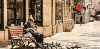 Old man feeding pigeons