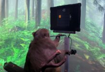Monkey playing Pong
